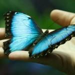 自然が生み出した機能美